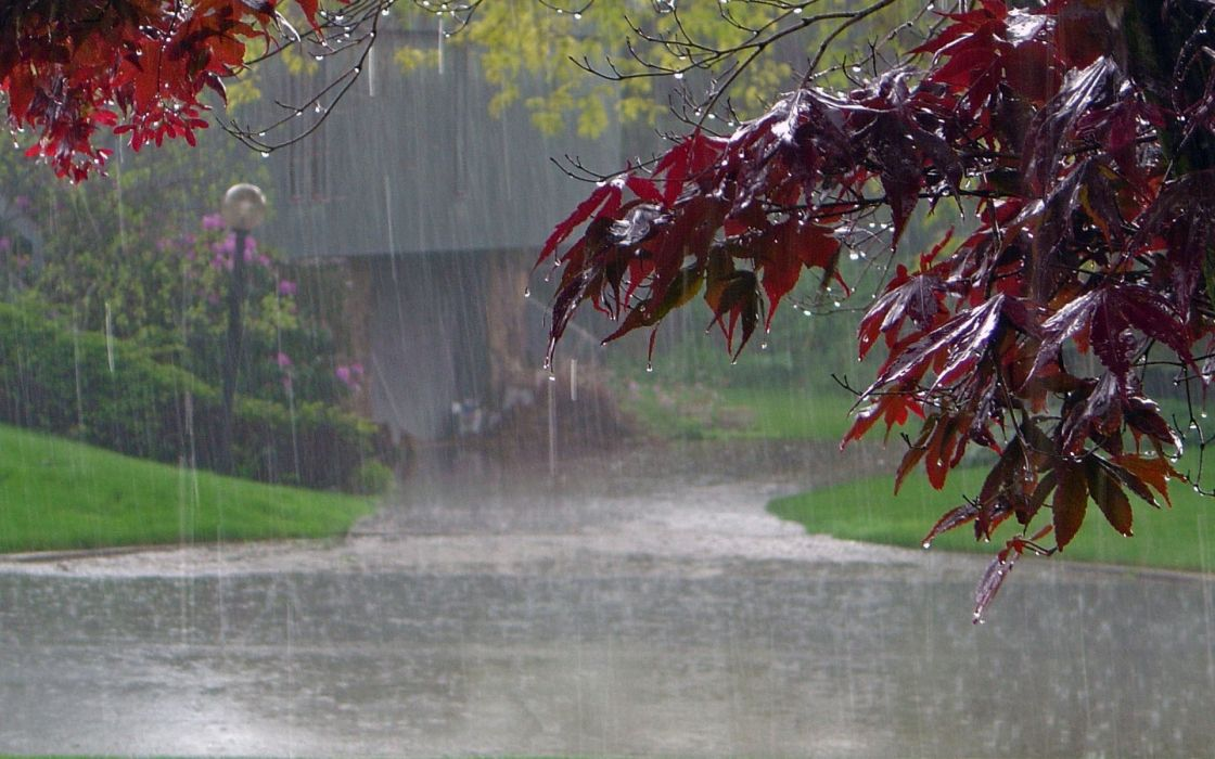 Landscapes nature trees rain wet path scenic wallpaper