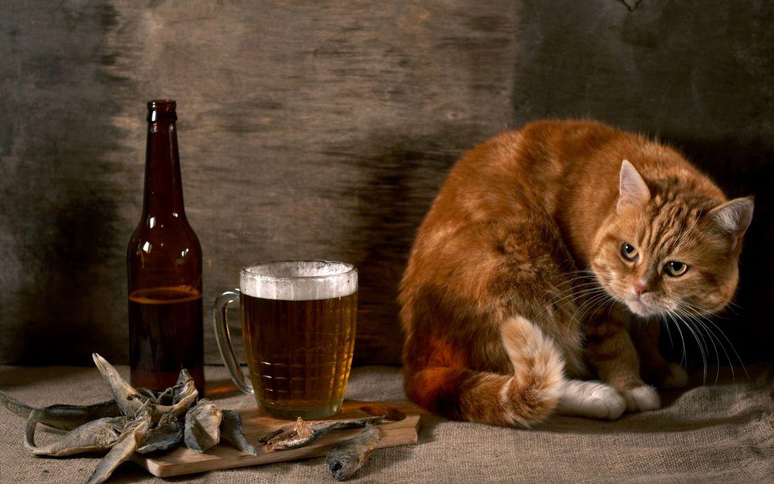 Beers cats animals food fish wallpaper