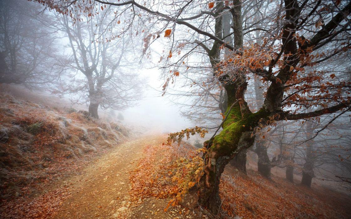Landscapes trees autumn path mist wallpaper