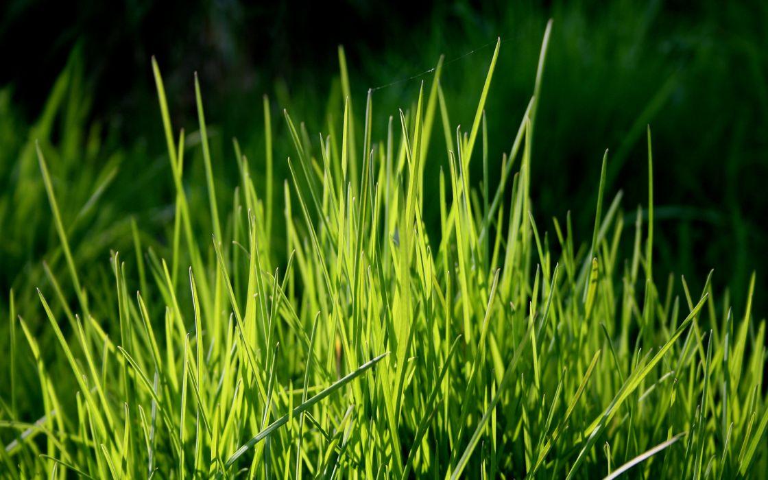 Nature grass plants depth of field wallpaper