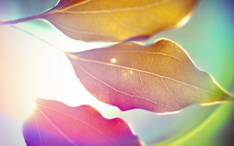 Leaves artwork macro wallpaper