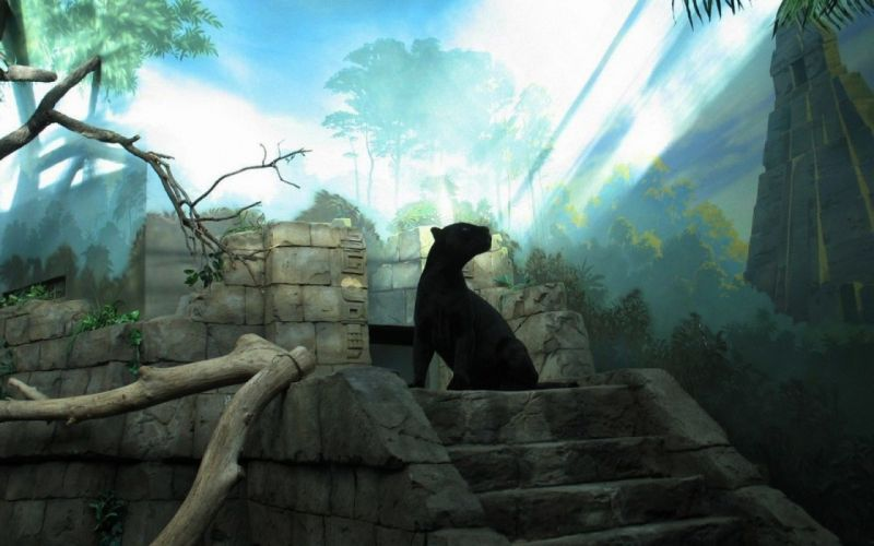 Panthers sunlight feline artwork black panther wallpaper