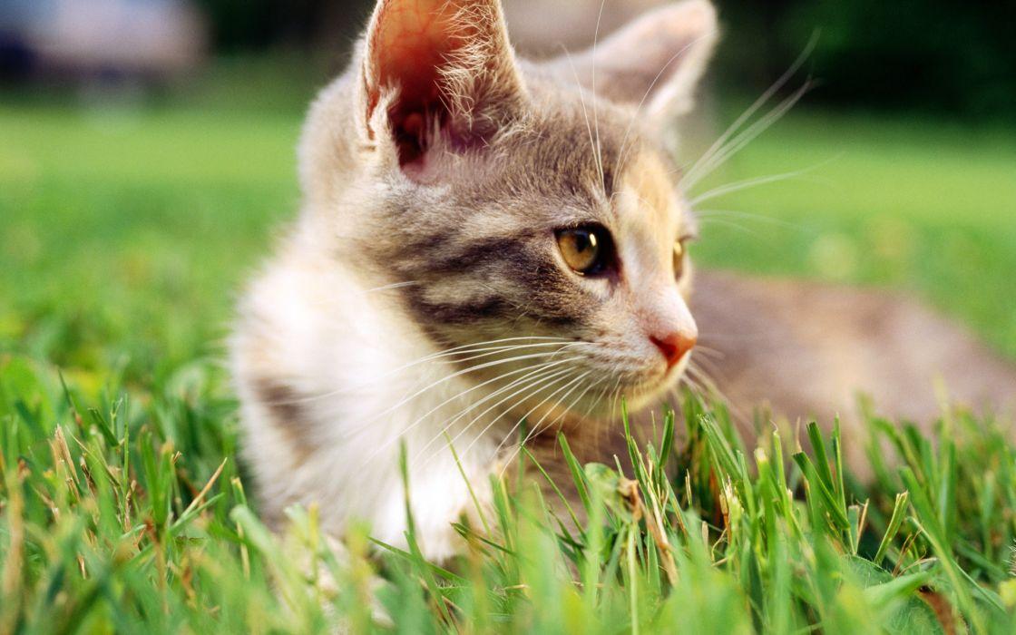 Cats grass outdoors kittens wallpaper