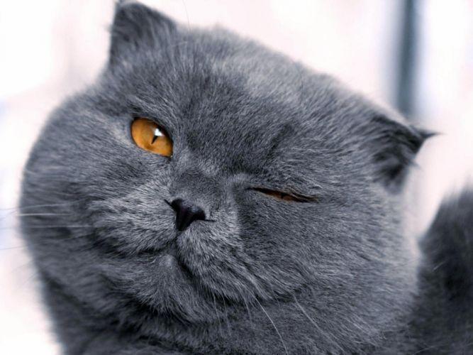 Cats animals funny feline wink pets blink wallpaper