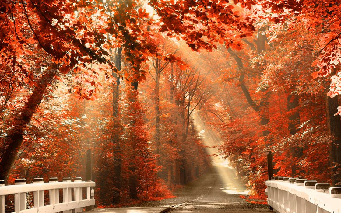 Nature autumn forest leaves wallpaper