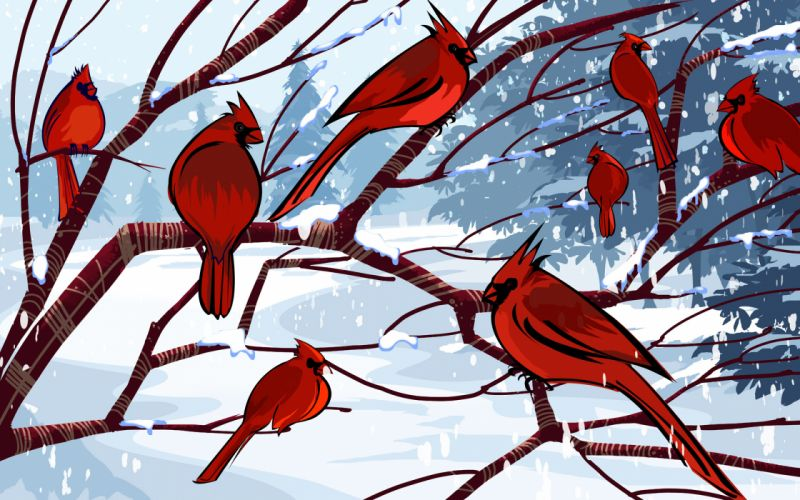 Birds cardinal artwork northern cardinal wallpaper