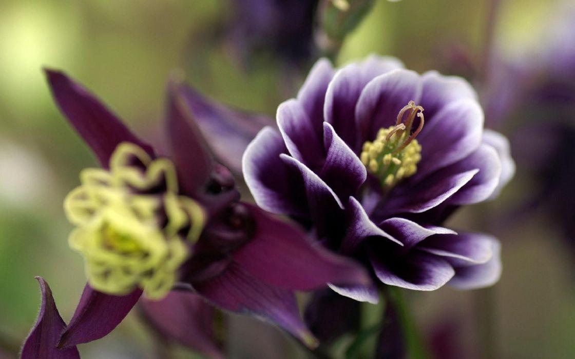 Nature flowers purple wallpaper
