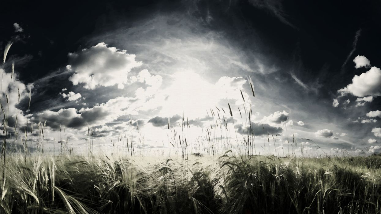 Landscapes wheat artwork skyscapes wallpaper