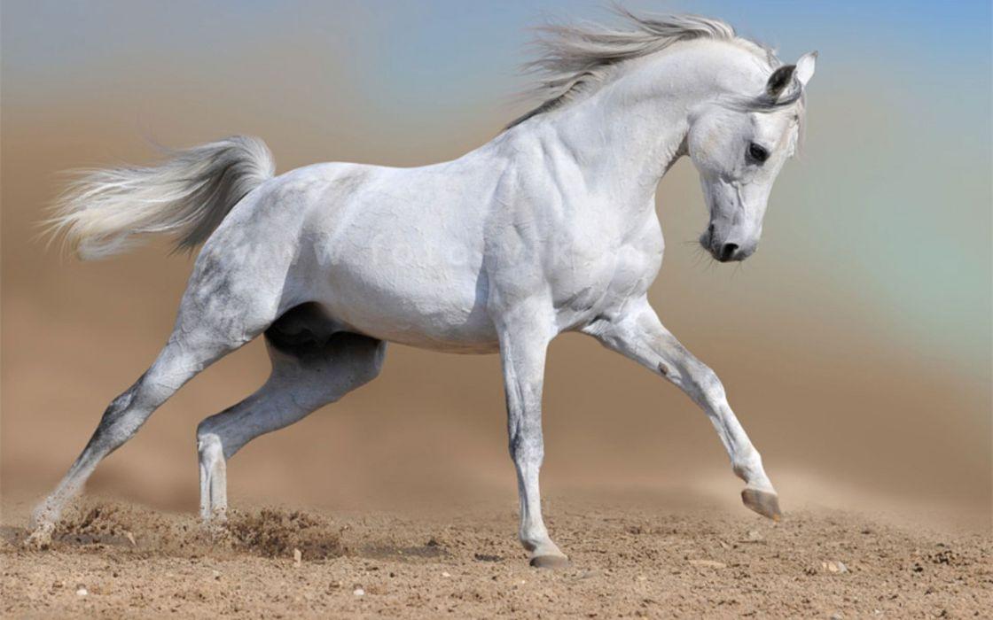 Landscapes nature animals horses wallpaper