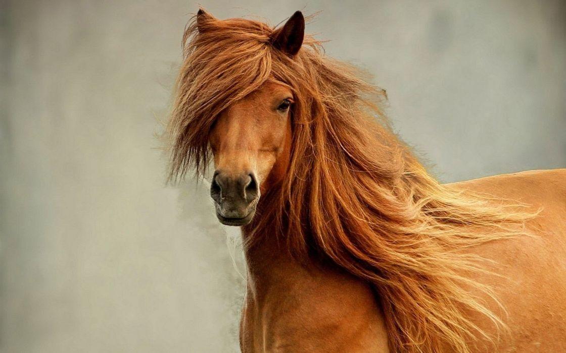 Animals horses sarah jessica parker wallpaper