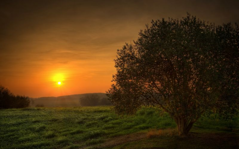 Sunset landscapes nature trees fields skyscapes wallpaper