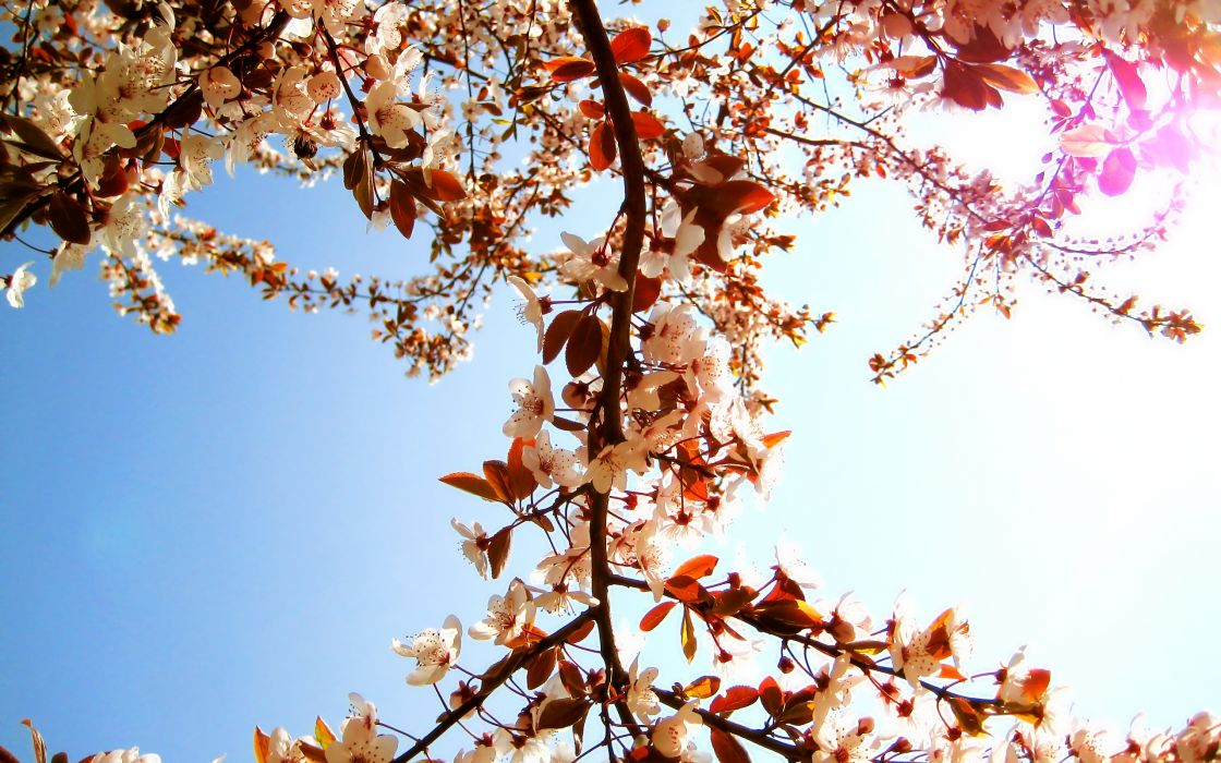 Up nature trees flowers spring wallpaper