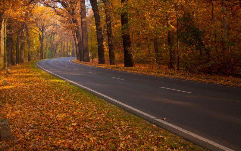 Trees roads fallen leaves wallpaper