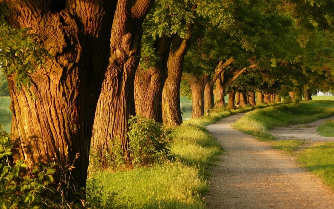 Landscapes nature trees forest alley wallpaper