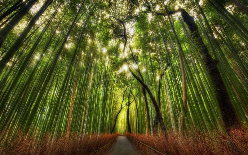 Landscapes nature trees forest roads wallpaper