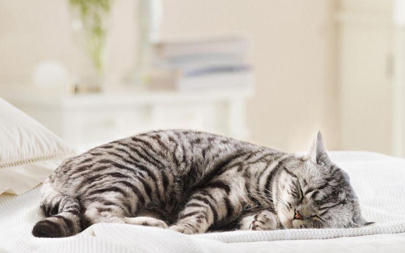 Cats animals closed eyes wallpaper