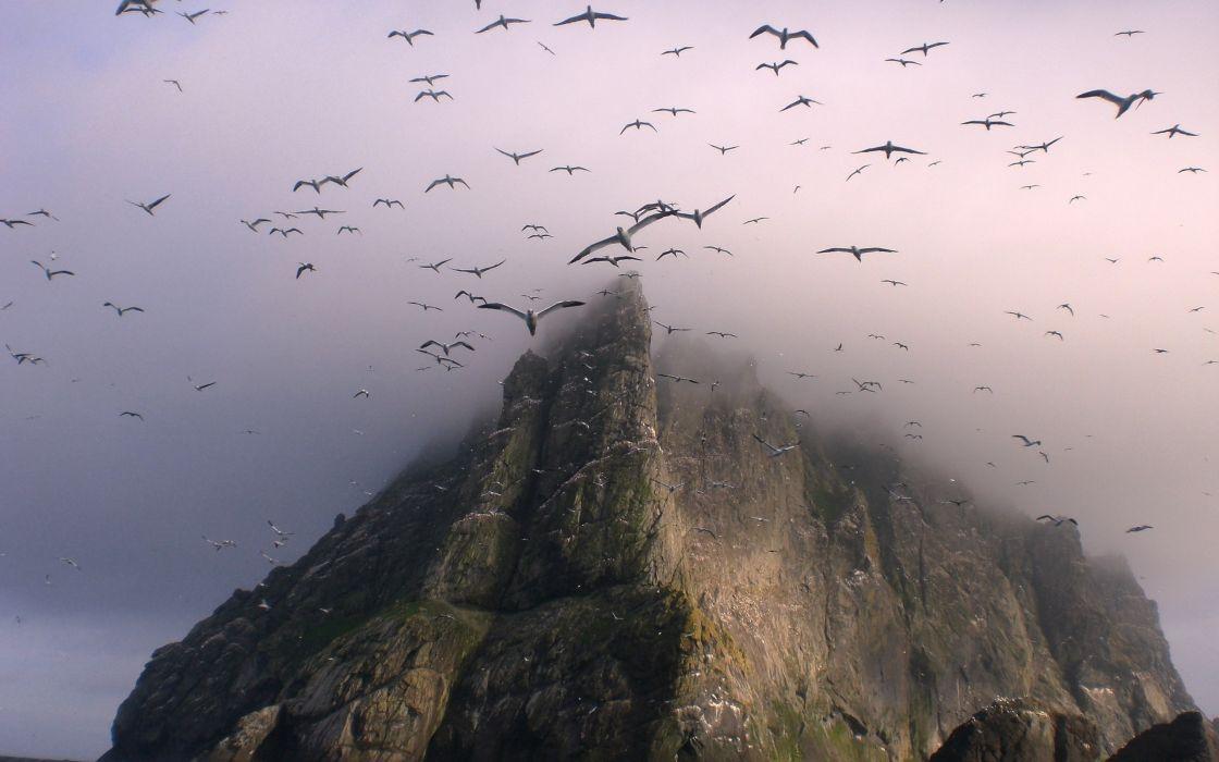 Mountains nature birds fog wallpaper