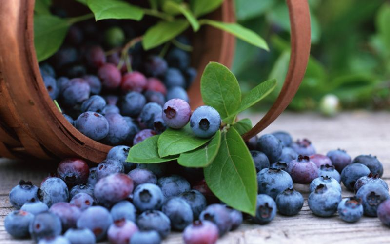 Fruits blueberries wallpaper