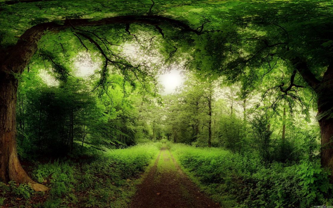Green landscapes nature sun trees forest summer roads skyscapes wallpaper