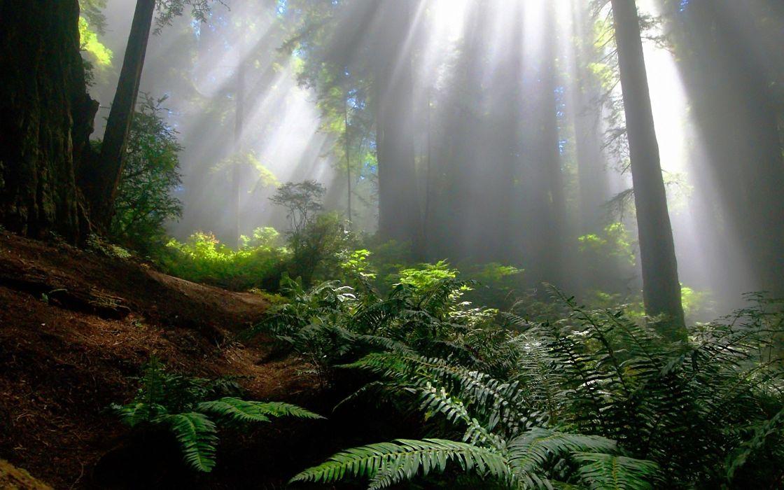 Landscapes nature forest sunlight wallpaper