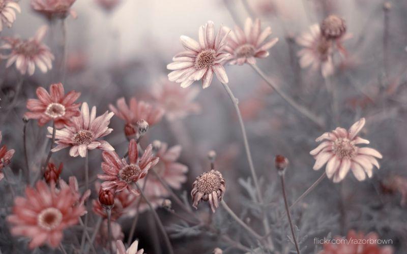 Flowers depth of field wallpaper