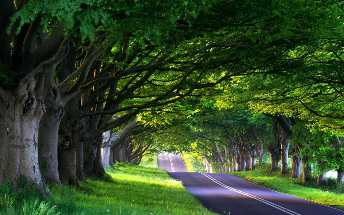 Nature trees roads wallpaper