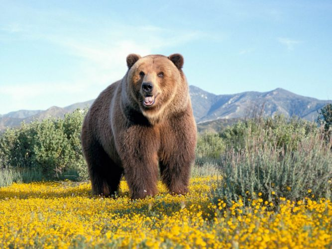Nature flowers animals bears wallpaper