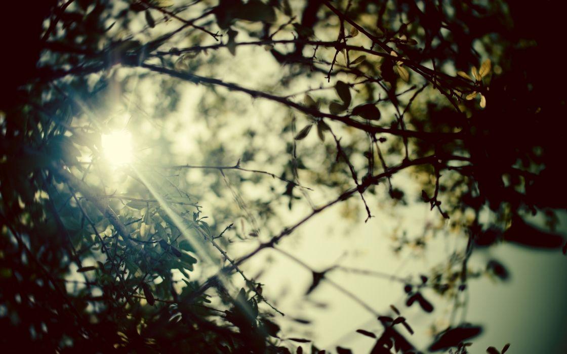 Nature forest sunlight wallpaper