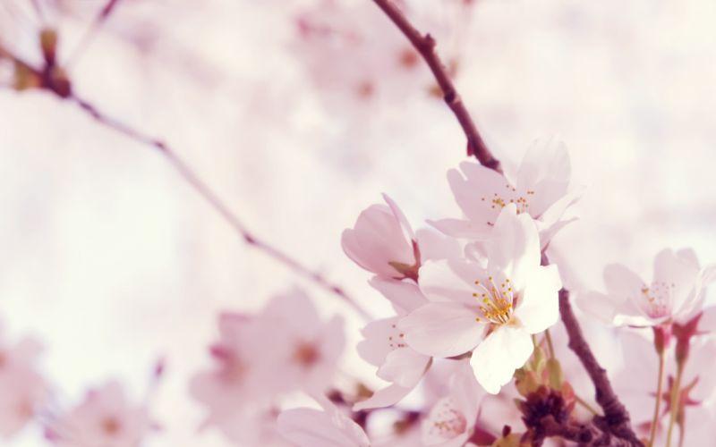 Nature trees flowers wallpaper
