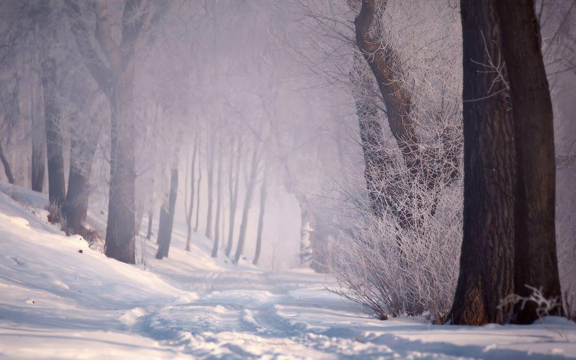 Snow trees wallpaper