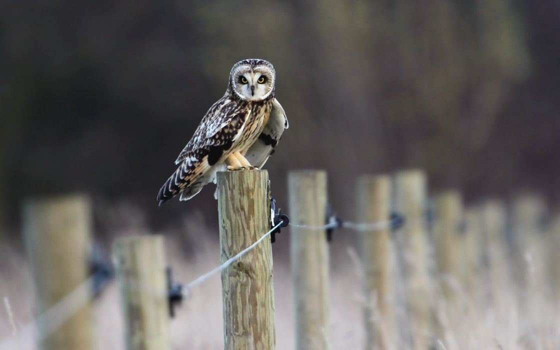 Wood owls pole wallpaper