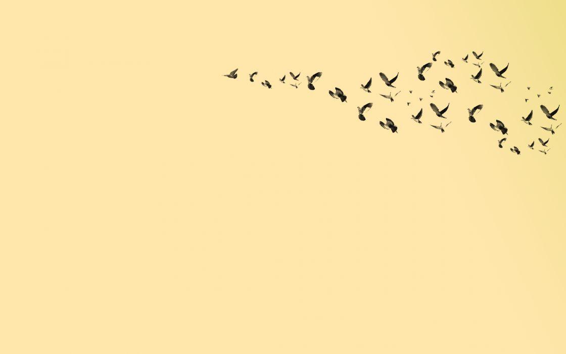 Birds pigeons wallpaper