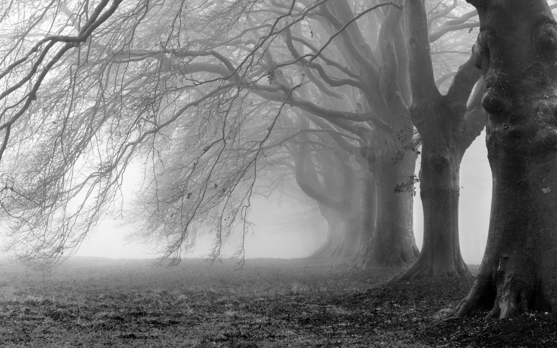 Creepy trees fog wallpaper