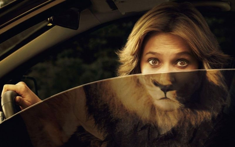 Women mirrors funny lions reflections wallpaper