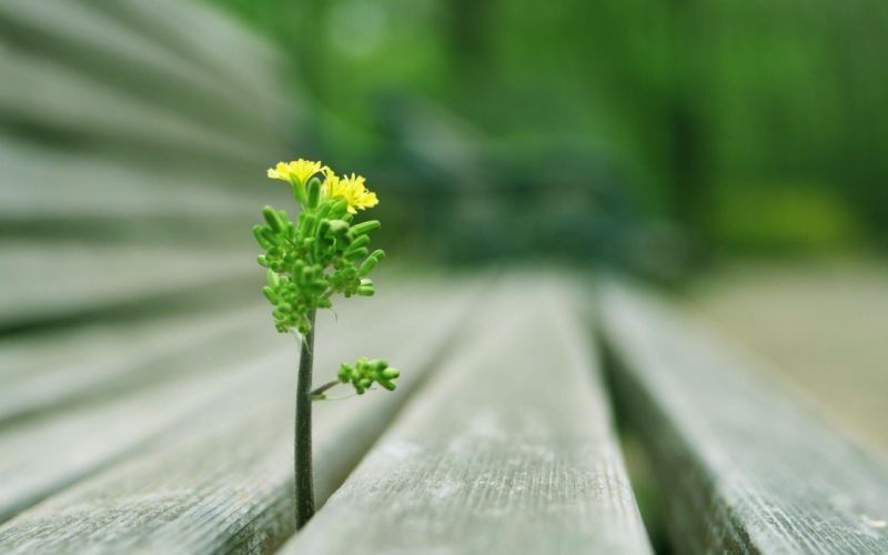 Trees plants bench depth of field wallpaper