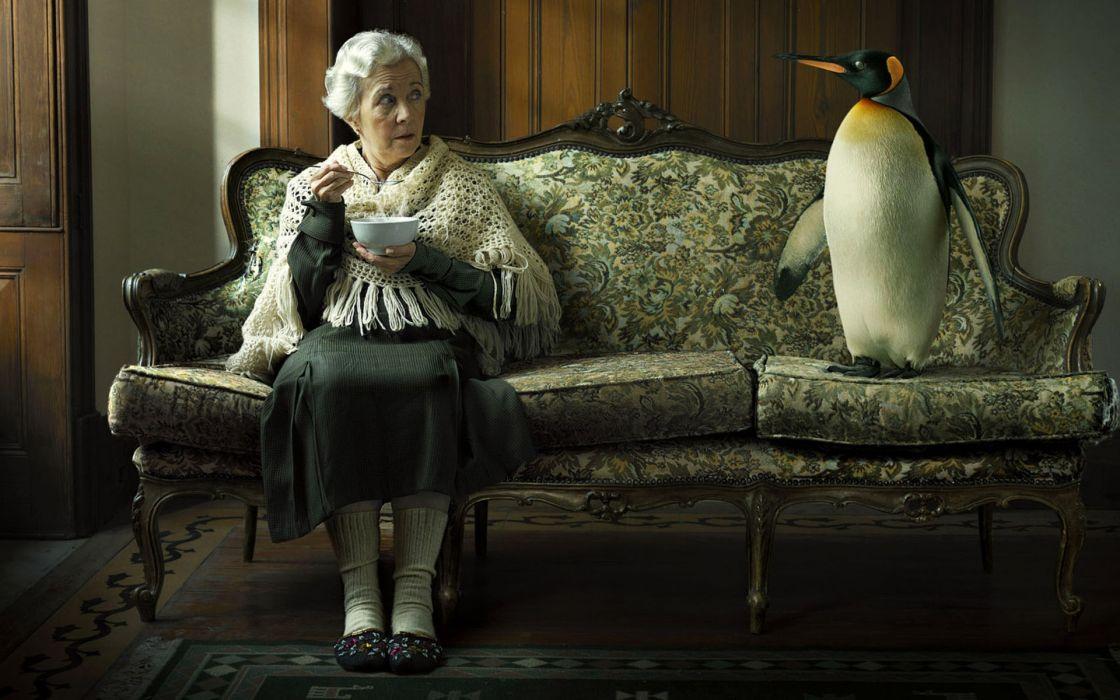 Women old penguins interesting wallpaper