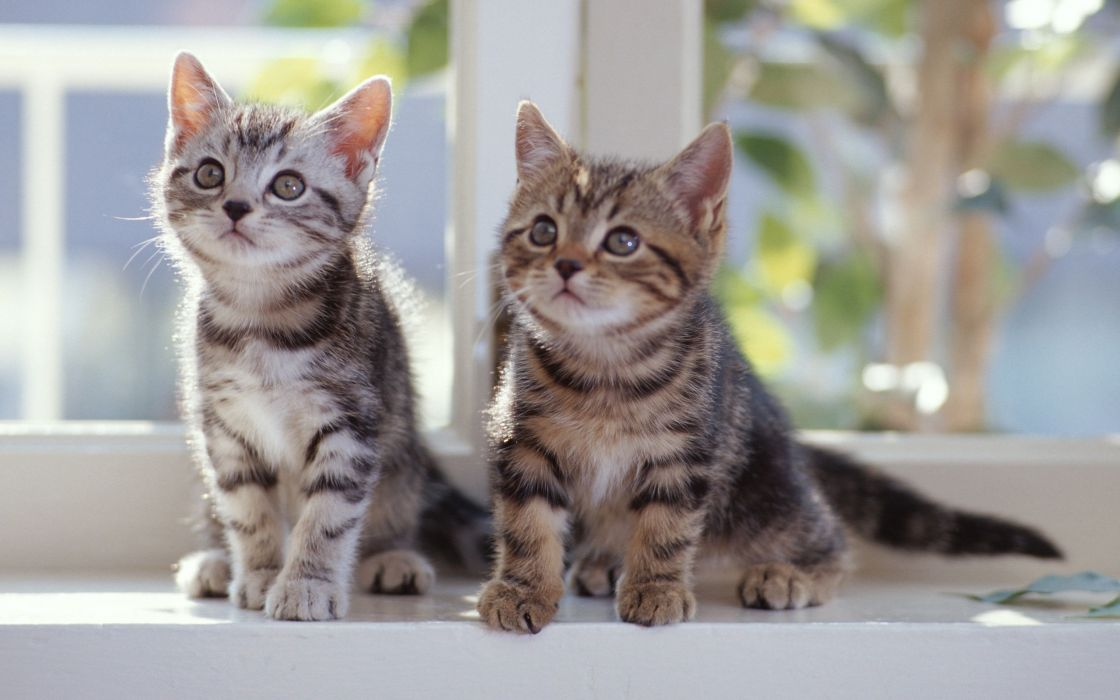Cats animals kittens window panes wallpaper