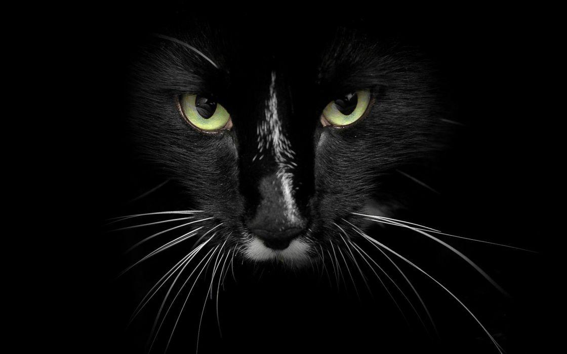 Eyes cats animals feline wallpaper