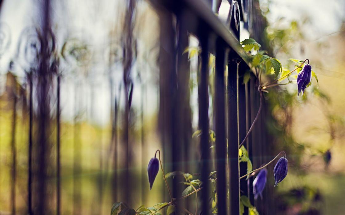 Flowers fences depth of field wallpaper