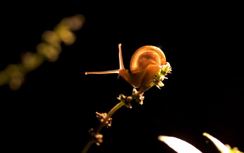 Animals insects snails macro wallpaper
