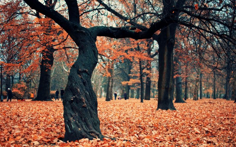 Trees autumn forest wallpaper
