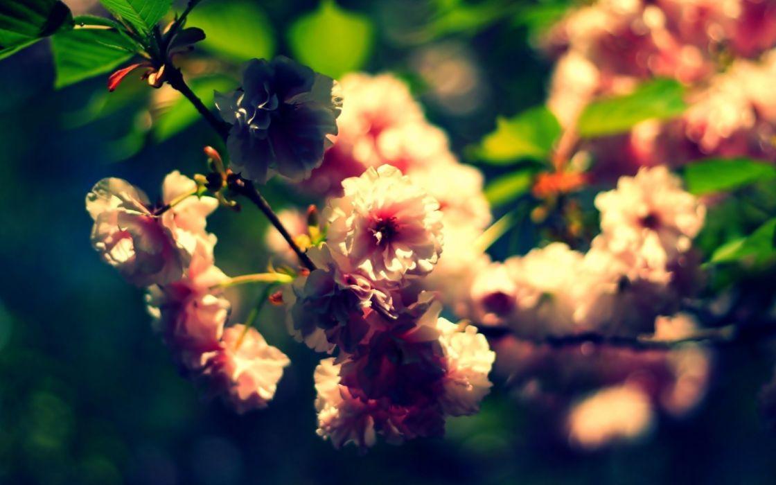 Nature flowers summer depth of field wallpaper