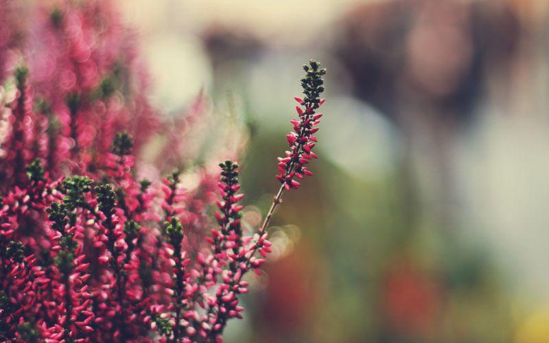 Nature plants macro wallpaper