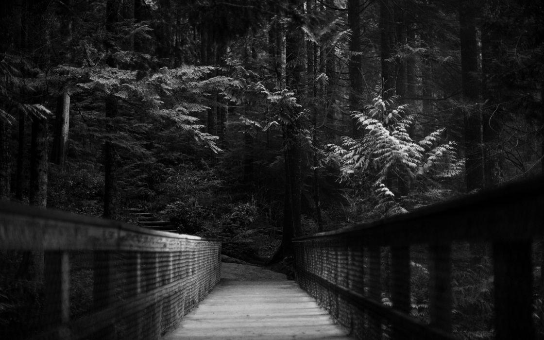 Trees dark forest path monochrome wallpaper