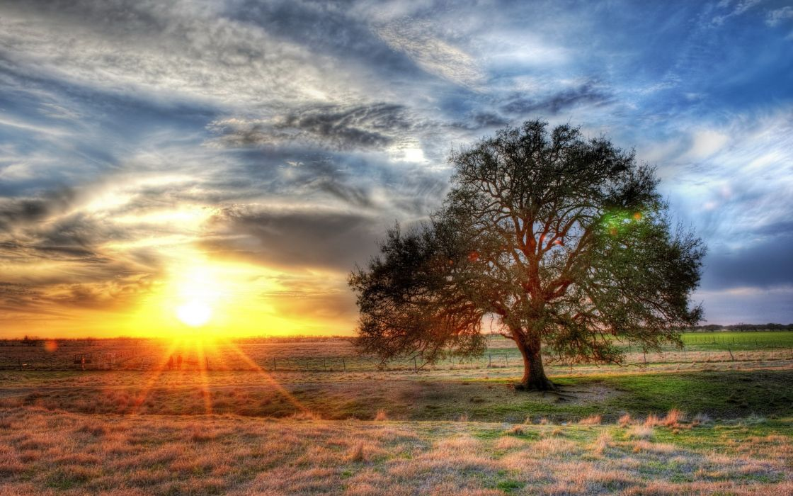 Landscapes nature sun trees wallpaper