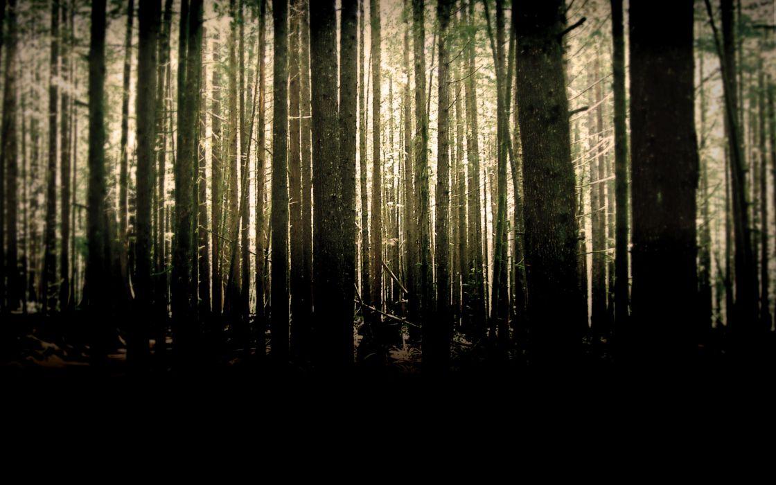 Nature woods wallpaper