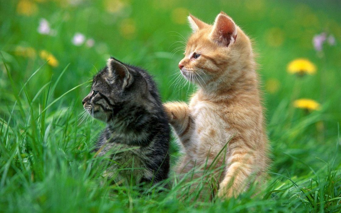 Cats animals grass kittens wallpaper