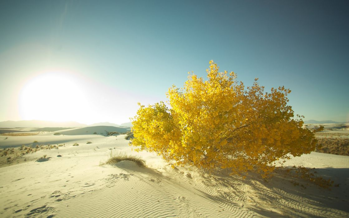 Landscapes nature sand desert macro wallpaper