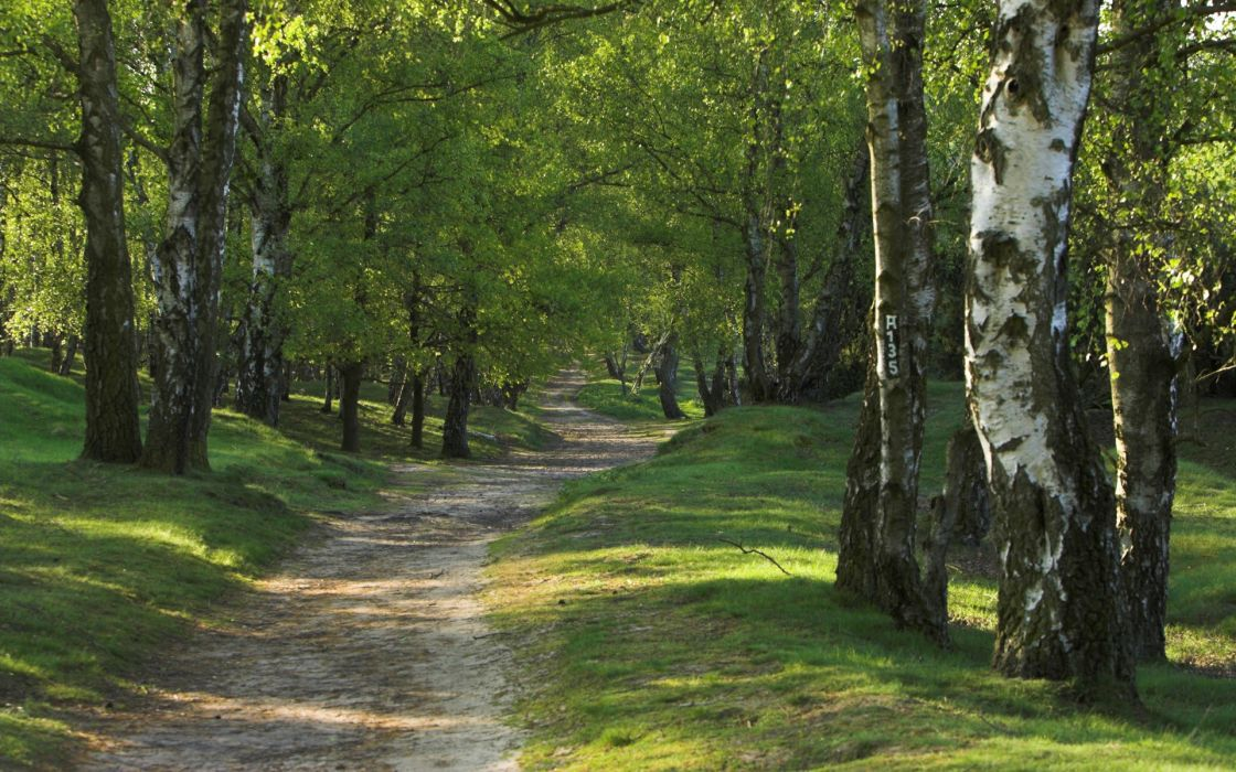 Trees forest roads wallpaper