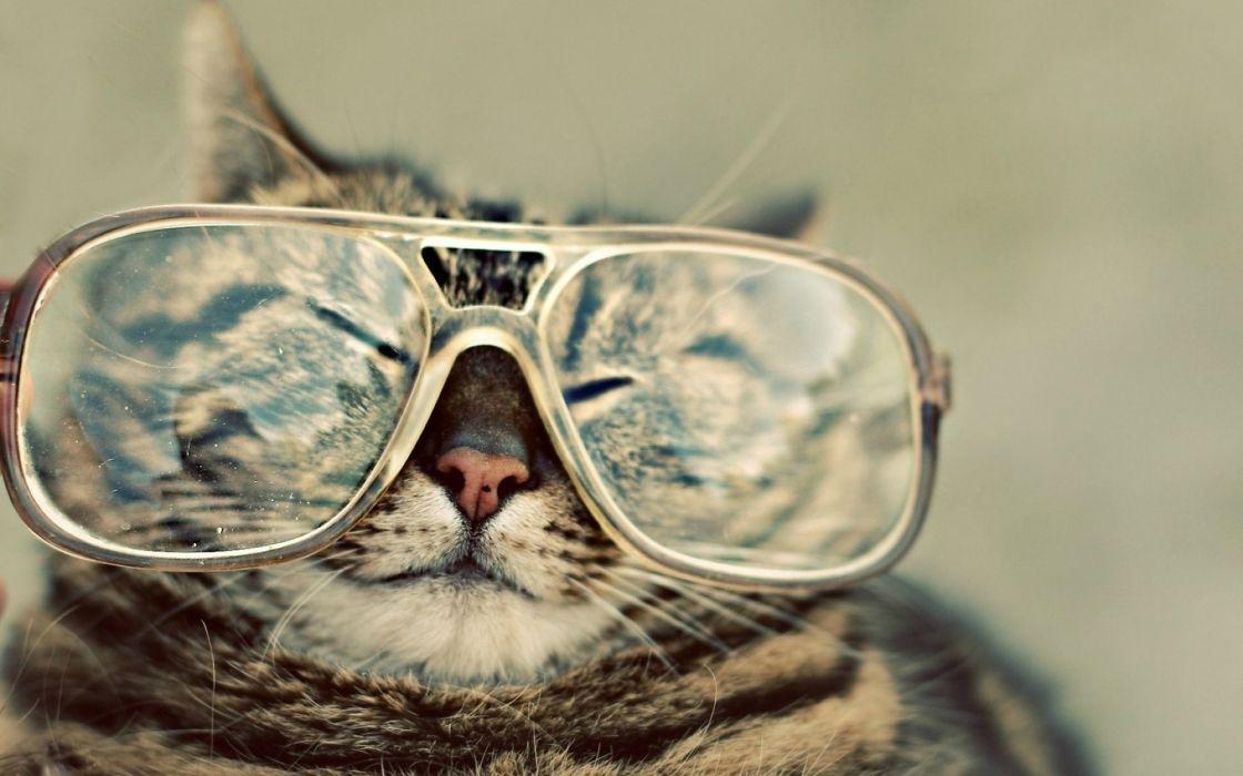 Cats animals glasses wallpaper